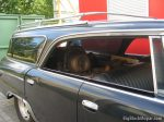 1962 Chrysler NewYorker Wagon - 392 Hemi Hauling